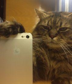Gatito haciéndose una foto en el espejo con el móvil. Más en www.lasfotosmasgraciosas.com