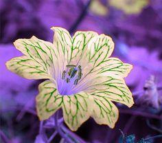 ~~Alien Flower~~