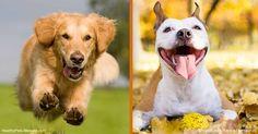 Las mascotas acumulan toxinas de muchas fuentes y está sobrecarga puede debilitar su sistema inmunológico, causar tumores, quistes e incluso fallas en los órganos. http://mascotas.mercola.com/sitios/mascotas/archivo/2017/04/02/desintoxicacion-de-mascotas.aspx