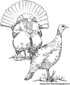 Turkey Hunting Coloring Pages Head Red white and blue