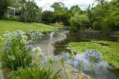 brisbane gardens - Bing Images