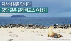 갈라파고스 제도의 동물들 - 지상낙원 갈라파고스 여행 http://www.insightofgscaltex.com/?p=15719
