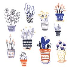 Natali Sejuro Aliaga - My Plants