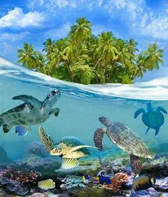 Tortugas en Maldivas