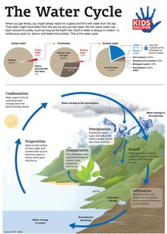 Infographic: The Water Cycle - KIDS DISCOVER you have to register (free) with Kids Discover to download for free