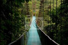 Wall Mural a hanging bridge in the costa rican jungle - trek • would look cool anywhere - not sure tall enough - height max 6 ft. 4x6 - $180