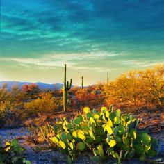 5 Alluring Reasons to Visit Saguaro National Park