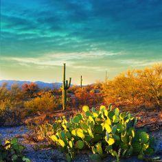 5 Alluring Reasons to Visit Saguaro National Park