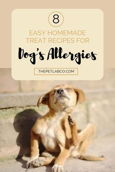 The Ultimate Guide to Home Remedies for Dog Allergies - Stop! Before you get your dog tested for allergies, have you tried everything? I have pulled togeth - Dog Health Tips, Pet Health, Big Dog Toys, Dog Test, Yorky, Animal Nutrition, Dog Care Tips, Pet Care, Best Dog Training
