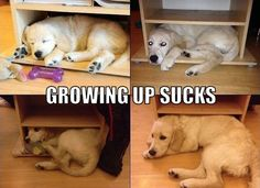 Growing Up Sucks cute animals dogs adorable dog puppy animal pets funny animals funny pets funny dogs