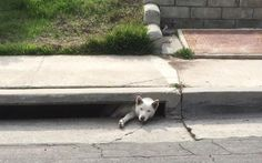 Dog trapped in San Diego storm drain