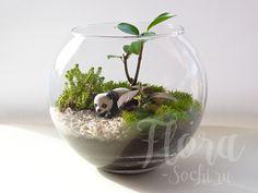 florarium | terrarium | design | garden | panda | флорариум