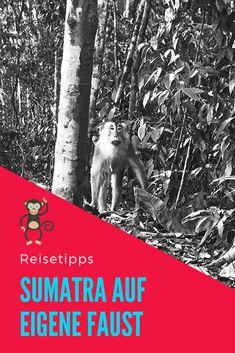 In diesem Artikel gebe ich alle meine Reisetipps für die Sumatra Reise auf eigene Faust weiter. Hier entlang! Rafting, Orang Utan, Movie Posters, National Forest, Explore, Travel Advice, Places, Travel, Photo Illustration
