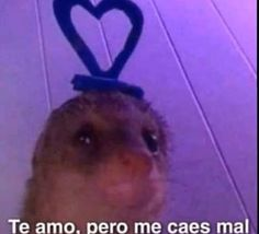 Reaction Pictures, Funny Pictures, Haha Funny, Funny Memes, Spanish Memes, Mood Pics, Meme Faces, Otaku Anime, Cool Photos