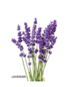 Interior Design For Bathroom Free Printable Bingo Cards, Free Printables, Garden Games, Crafts For Seniors, Lavandula Angustifolia, How To Make Tea, Do It Yourself Home, Coloring Pages, Glass Vase