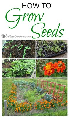 How to Grow Any Plant You Want From Seed So You Can Fill Your Gardens And Summer Planters, Without The Guilt Of Spending Tons of Money Buying Plants Every Spring