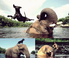 Elefante huérfano juega con su amiga,a la pelota la perra es Bella (nombre)