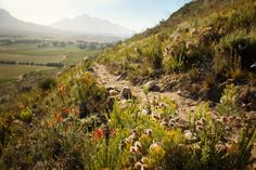 Take a scenic hike around the winelands. La Motte 5 minutes from La Clé des Montagnes- 4 luxurious villas on a working wine farm Table Mountain, Green Mountain, Hiking Routes, Hiking Trails, South Afrika, Mountain Bike Trails, Bethlehem, World Heritage Sites, Rafting