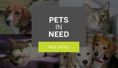N.J. pets in need: Sept. 18, 2017