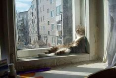 Best Of Cats Chillin' ~ Damn Cool Pictures
