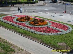 Begonia semperflorens Garden Yard Ideas, Backyard Patio Designs, Front Yard Landscaping, Garden Art, Beautiful Park, Beautiful Gardens, Beautiful Flowers, Commercial Landscape Design, Outside Pool