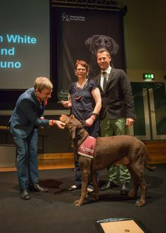 Martin at The Hearing Dogs Awards. October 10, 2013 // He can't be more adorable, can he?