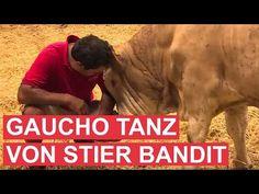 Als dieser Stier gerettet wird, dankt er es seinen Rettern mit einem Freudentanz!