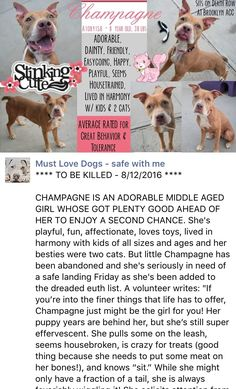 HAPPYTEARS ❤️❤️❤️ SAFE❤️❤️ 8/12/16 BY REBOUND HOUNDS❤️ THANK YOU SO VERY MUCH❤️❤️ Brooklyn Center My name is CHAMPAGNE. My Animal ID # is A1084158. I am a female brown pit bull mix. The shelter thinks I am about 8 YEARS old. I came in the shelter as a STRAY on 08/04/2016 from NY 11691, owner surrender reason stated was ABANDON. http://nycdogs.urgentpodr.org/champagne-a1084158/