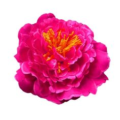 DZT1968(TM)Women Girl Bride Shoot Daily Bohemian Beach Wedding Party Big Flower Headwear Hair Pin With Clip (Hot Pink) ** You can find out more details at the link of the image. (This is an Amazon affiliate link)