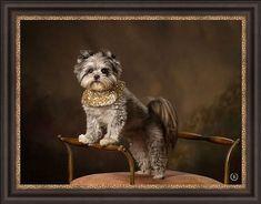 Baby Kevin is SIX!!! #dogsofinstagram #maltipomsofinstagram #maltipom #granddog #birthday #birthdayboy #jameyreedportraits #jameyreed #jameyreedphotography #guntersvillealabama Guntersville Alabama, Add Image, Boy Birthday, Fine Art, Dogs, Baby, Animals, Instagram, Animales