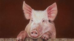 Pig Portrait [Video Course] | Learn to draw this Pig Portrait using Pastel Pencils. Video Course.