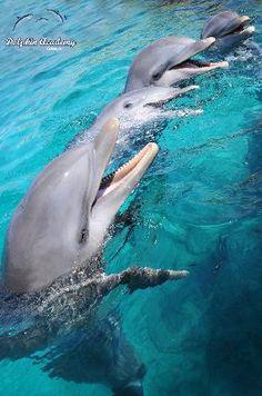Dolphin Academy/Curacao