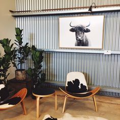 """Highlanders in the Hinterland"" by Victoria Aguirre, co-founder of Pampa. Exhibition at The Farm Byron Bay #scottishcows #scottishhighlandcows #highlandcows"