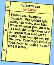 Spins a Web: Spiders | Magic School Bus | Scholastic.com