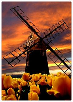 Windmill and Tulips are Paston, Norfolk.