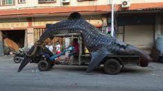 Whale Shark heads to market in China :(