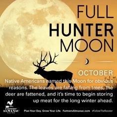 October's #FullMoon can be the Hunters Moon or the Harvest Moon. The Harvest Moon is the Moon that falls most closely to the equinox, and that can be either September or October. When the Harvest Moon is in September, the October Moon becomes the Hunter's Moon. Find out why October's full moon was an important signal to Native Americans as they prepared for the upcoming long winter in our short video: https://www.farmersalmanac.com/octobers-full-hunters-moon-17868 #folklore #legends…