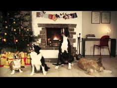 "This commercial for Pedigree dog food shows four canine friends lying in front of a fireplace. Watch as they bark to the tune of the popular Christmas song ""Jingle Bells"", and do a great job of actually staying on key throughout the song. Christmas Animals, Christmas Cats, Christmas Humor, Christmas Tunes, Merry Christmas, Cute Puppies, Dogs And Puppies, Doggies, Dog Barking Video"