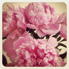 // Pretty #peonies // (Taken with instagram)