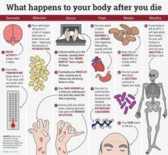 What happens to your body when you die. After your heart stops beating, your body slowly begins to decay without preservation techniques like embalming or mummification. It starts small, down at the cellular level. Then bacteria, animals, and even the body itself begins to digest your organs and tissues. Here's how the complete process of decay plays out.