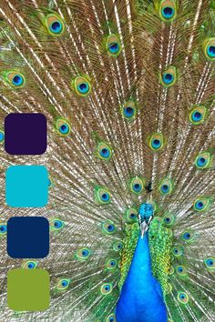 Peacock colors with a little purple too!