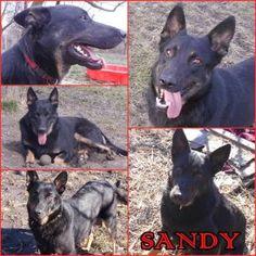 Örökbefogadható kutyák - Sandy - Hajdúszoboszlói Kutyabarátok Egyesület