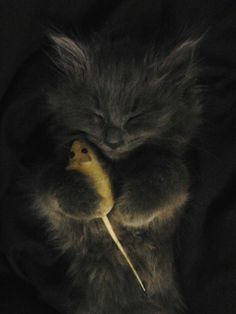 Sleepy Kitten and Her Toy Mouse
