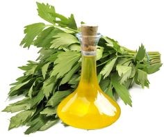 The Use of Lovage Oil