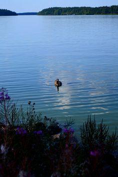 Bald Eagle, Animal Pictures, Explore, Bird, Photography, Animals, Photograph, Animales, Animaux