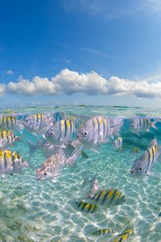 Cool off in the crystal-clear waters of Seven Mile Beach. Small reefs off the shore of Grand Cayman make this a great spot to go snorkeling and discover the local marine life. Dream Vacations, Vacation Spots, Trinidad, Fauna Marina, Foto Art, Grand Cayman, Am Meer, Ocean Life, Marine Life