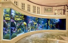 Wow! Salt water aquariums full of  beautiful tropical fish and reef creatures creatively installed.