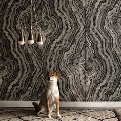 Apparatus Studio and Zak + Fox: Tree ring-patterned wall fabric and neuron-inspired lighting from two NYC-based design teams