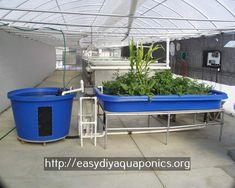 pit greenhouse aquaponics - aquaponics business opportunities.solar powered aquaponics 4229257001