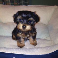 I love my little Bella!!